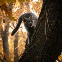 Охота :: Евгеша Сафронова