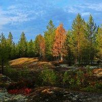 Краски северного леса. :: Galina S*
