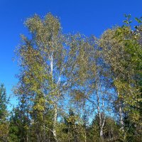 Осень :: Валентин Когун