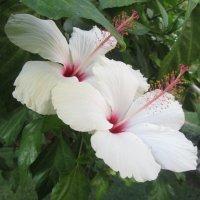 цветы Турции :: tgtyjdrf