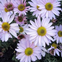 Осенние цветы. :: Мила Бовкун