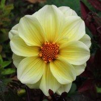 Цветок ! :: Damir Si