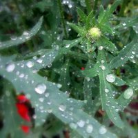 После дождя . :: Мила Бовкун