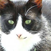 Эти глаза напротив... :: Swetlana V