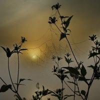 Солнце в плену ... :: Александр Буланов