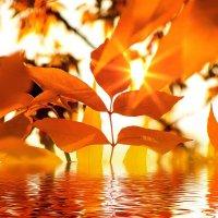 Осень :: Владимир