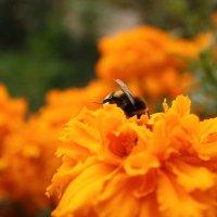 Осенний нектар :: Марина Симакова