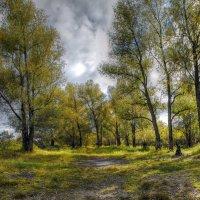 Солнечный осенний день неподалёку от реки. Окрестности Новосибирска :: Vadim Piottukh
