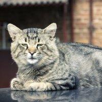Кот, постигший Дао :: Денис Пшеничный