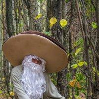 ГРИБ с грибами :: Сергей Говорков