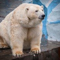 Большая медведица... :: Владимир Габов