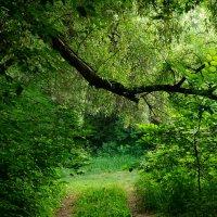 В тени леса :: Борис Кононов