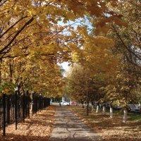 дорогой в осень :: Евгения Куприянова