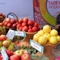 Городской фестиваль яблок. :: Anna Gornostayeva