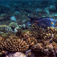 под водой1 :: navalon M