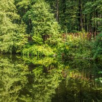 Лесной пруд :: Elena Ignatova