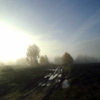 Солнечное и туманное утро :: Николай Туркин