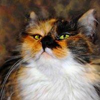 Флафи. Кошачья магия. :: TATYANA PODYMA