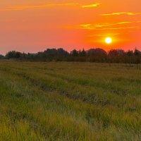 В поле :: Igor Yakovlev