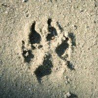 Там на неведомых дорожках следы невиданных...собак) :: Maggie Aidan