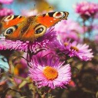бабочка :: Валерия Ястремская