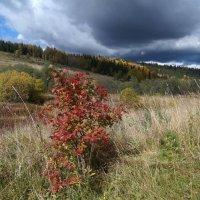 Борьба красок осени :: Валерий Чепкасов
