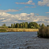 Река Толба. :: Олег Попков