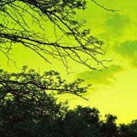 вечернее небо :: Элина Любицкая (Одинова)