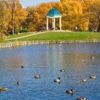 Осень в парке :: Elena Ignatova