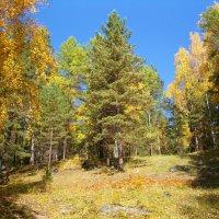 Осень пришла :: Николай Танаев