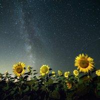 Ночь в подсолнухах :: Роман Склейнов