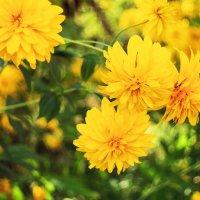цветы :: Max Flynt