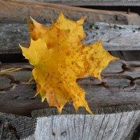 Падают листья.. :: zoja