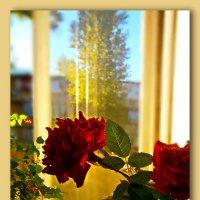 Как то вечерком, заглянула осень в гости...... :: Людмила Богданова (Скачко)