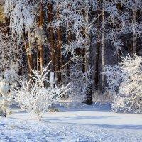 зимний лес :: Виктор Ковчин