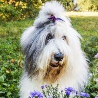 Маня и цветы :: Лариса Батурова