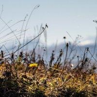 Осеннние мазки.. :: ФотоЛюбка *