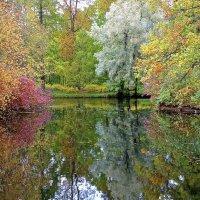 Осень в Елагином парке. :: Милана Гресь