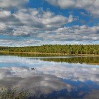 Лесное озеро :: Виктор (Victor)