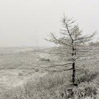 Вот и зима... :: Витас Бенета