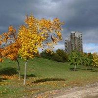 Осень в городе. :: Александр Атаулин
