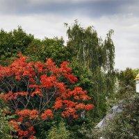 Осень пришла :: Alex Sash
