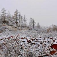 Зима пришла... :: Витас Бенета
