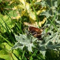 В траве сидел кузнечик... :: Vladimir T