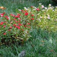 Цветы сентября.. :: Тамара (st.tamara)