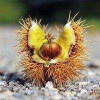 Золушки,- спешите !!!! :: Alexander Andronik