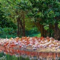 Розовый берег :: Артем Мамонтов