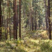 лес :: Антонина