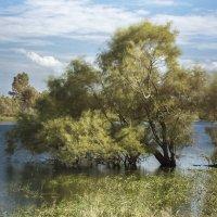 Дерево в воде :: Анна Шелест