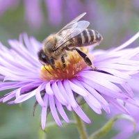 Пчелка :: Виталий Устинов